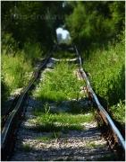 Железная дорога через березовую рощу