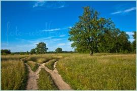 Полевая дорога на Клязьму. Летние пейзажи