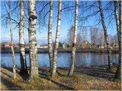 Первый лед на деревенском пруду. Осенние пейзажи