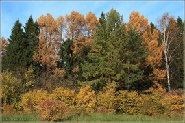 Краски осени. Осенние пейзажи