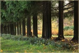 Аллея осеннего парка. Осенние пейзажи