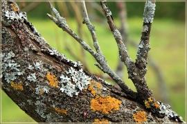Лишайники на коре дерева. Осенние пейзажи