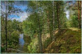 Фотография лесной реки. Суворощь