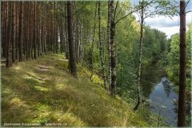 Красивое осеннее фото. Осенний лес. Обрыв, лесная река