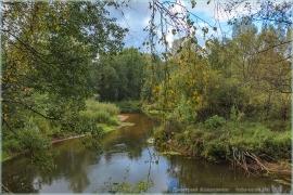 Фото лесной речки. Суворощь. Фото осеннего леса